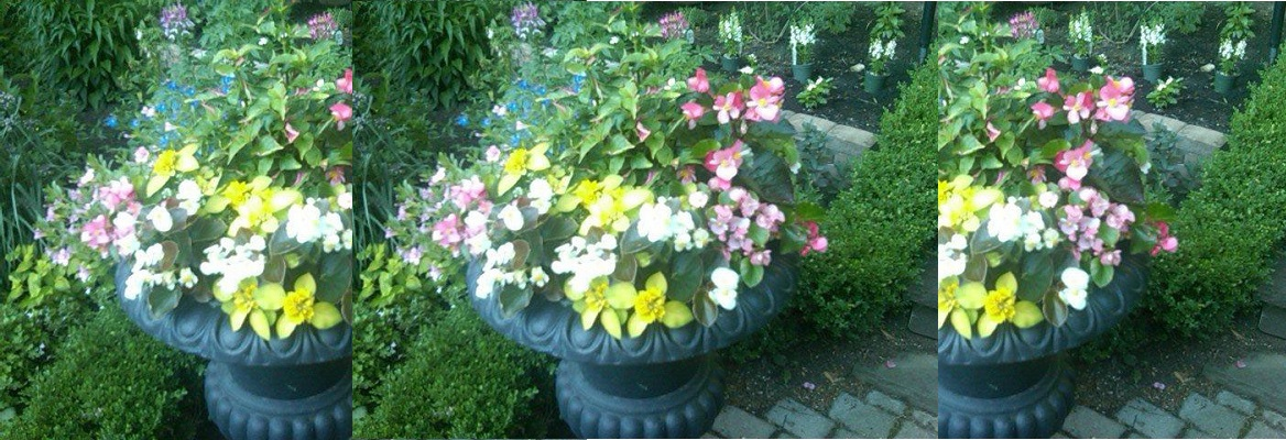 Planter with colourful flowers